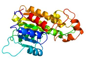 350px-DHRS7B_homology_model
